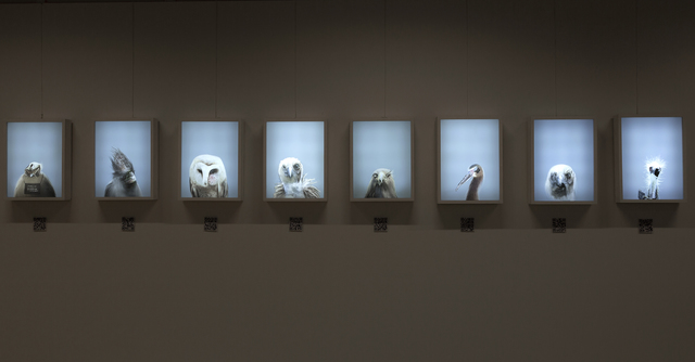 , 'The birds are coming archive,' 2017, Victorian College of the Arts, The University of Melbourne
