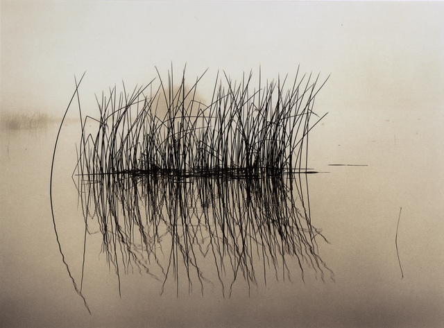 , 'Tules Raft,' 1997, Photography West Gallery