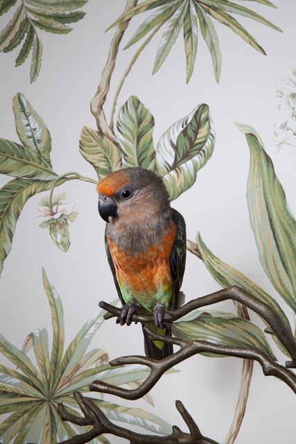 , 'Red Bellied Parrot,' 2012, Panopticon Gallery