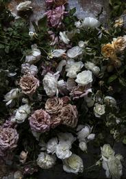 Laurel Canyon Roses