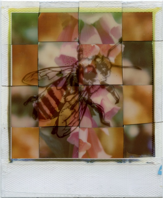 , 'Generation A - Contemporary, Polaroid, Photograph, Bees, Abstract, Color,' 2017, Instantdreams
