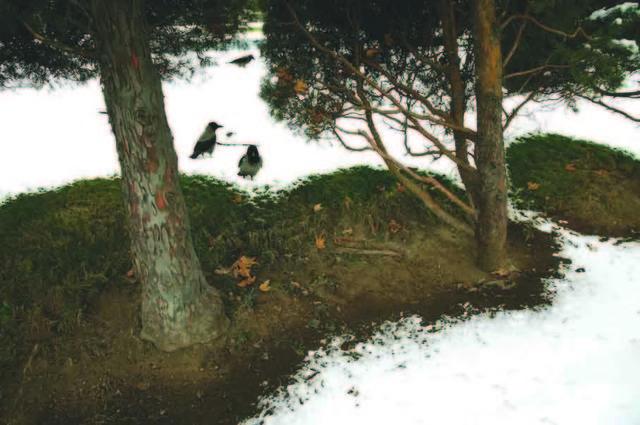 Abbas Kiarostami, 'Trees & Crows 33', 2007, Meem Gallery