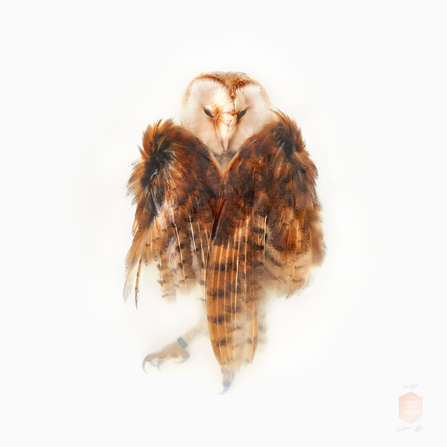 , 'Barn Owl, From the Series 'Unknown Poses',' 2016, Kahmann Gallery