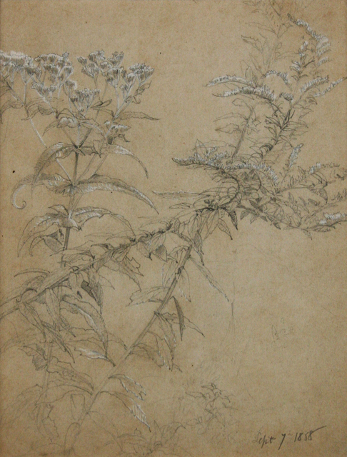 , 'Wildflowers Study,' 1858, Avery Galleries