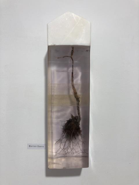 , 'Casa con raices,' 2014, MA arte contemporáneo