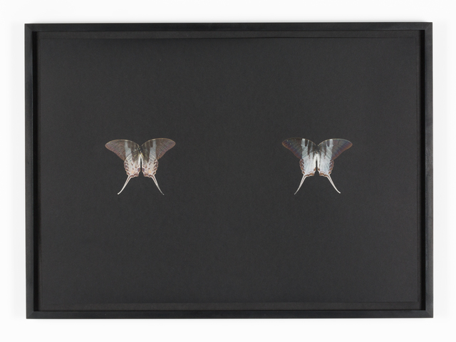 , 'Black Butterfly-Print #18,' 2017, Galerie Lisa Kandlhofer