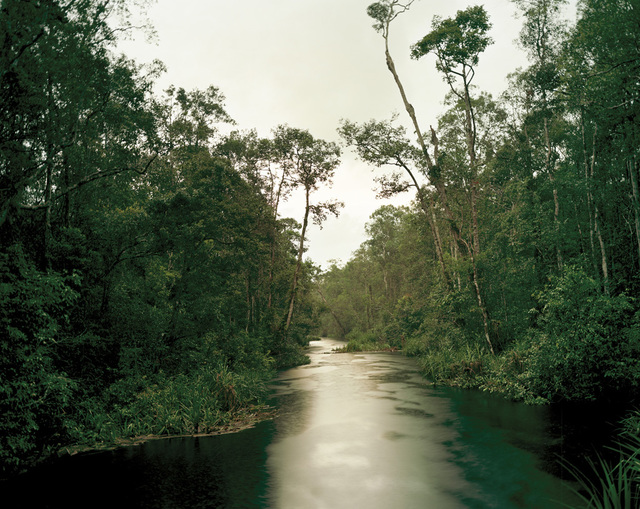 , 'Primary swamp forest 05, late dusk, South Kalimantan, Indonesia,' 2012, Galerie f5,6