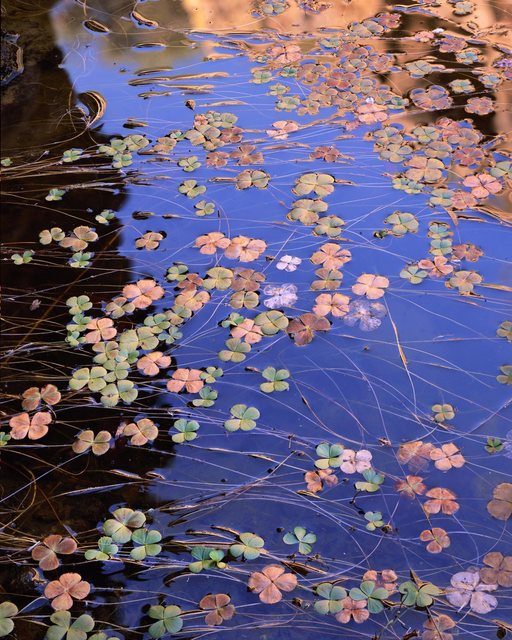 , 'Water Shamrocks,' 2009, The Art of Wild Gallery