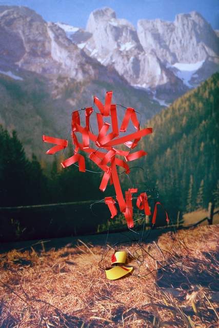 Thomas Albdorf, 'Typical Alpine Flora at the Hochschwab Area', 2014, Webber Gallery Space