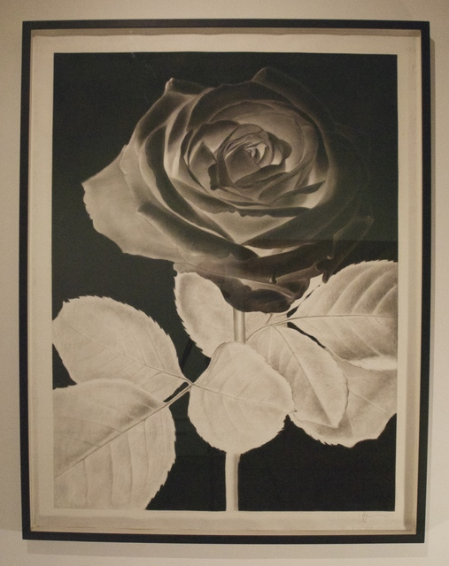 , 'Black Rose,' 2014, Castor Gallery