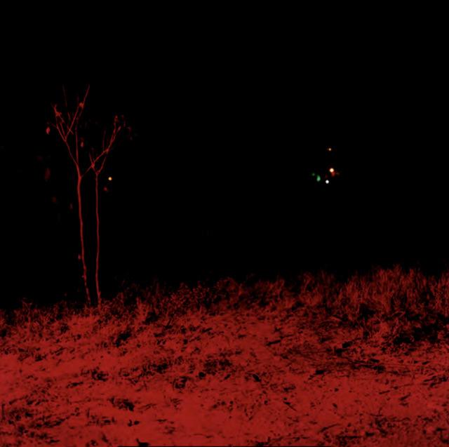 Dayanita Singh, 'Dream Villa (44) (red tree)', ca. 2006-2008, Photography, C-Print, Nature Morte