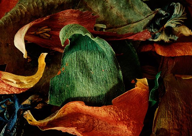 , 'Det gröna bladet (The green leaf),' 1993, CFHILL