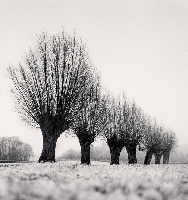 Michael Kenna, 'SEVEN POLLARDED TREES, CHAPAIZE, BOURGOGNE, FRANCE, 1998', 1998, Huxley-Parlour