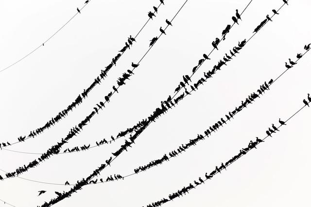, 'Kawau 018,' 2015, IBASHO