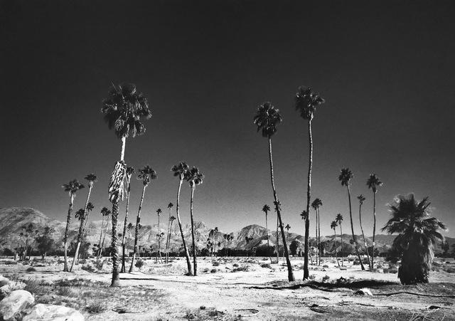 Michael Doster, 'Palm Springs', 2018, Galerie Leu