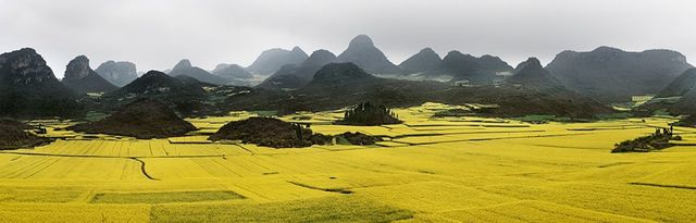 , 'Canola Fields #2, Luoping, Yunnan Province, China,' 2011, Sundaram Tagore Gallery
