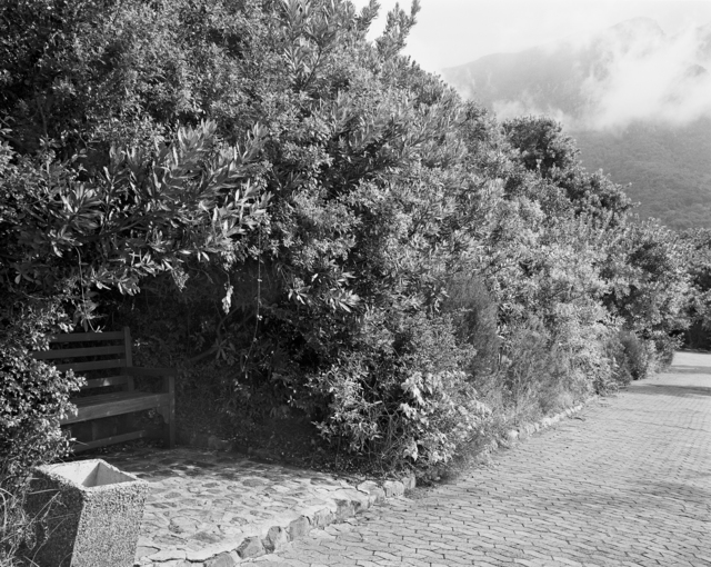 , 'Remnant of a wild almond hedge planted in 1660 to prevent livestock from being taken out of the European settlement in South Africa by the indigenous Khoi. Kirstenbosch, Cape Town. 16 May 1993,' 1993, Goodman Gallery