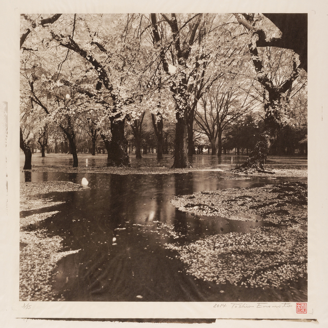 , 'Cherry Tree Wood in Yoyogi Park after a Spring Storm, Tokyo,' 2014, Micheko Galerie