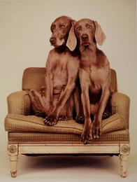 Grey Duo