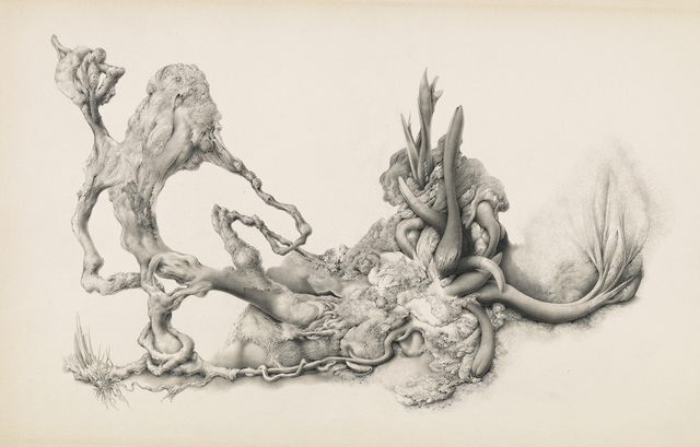 , 'Untitled [Fungi and Sprouting Botanical Forms],' ca. 1970, Francis M. Naumann Fine Art