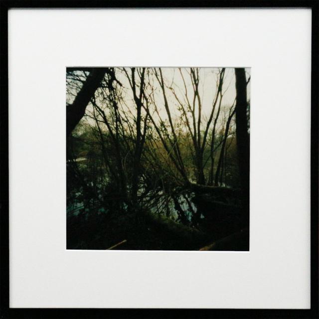 Dianne Bos, 'Pool of Peace, Spanbroeken Crater, Trees, Flanders', 2015, Newzones