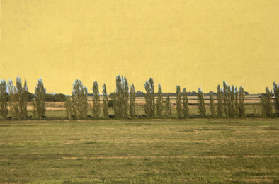 Alice Shaw, 'Poplars,' 2014, San Francisco Cinematheque: Benefit Auction 2016