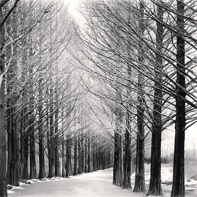 , 'Alley of Trees, Damyang, Jeollanamdo, South Korea,' 2002, Patricia Conde Galería