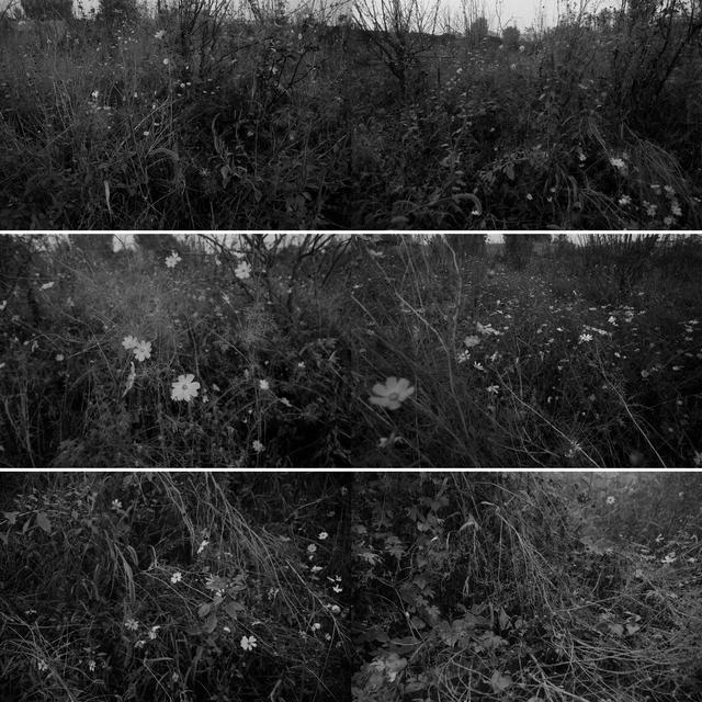 , 'Per Square Meter·My Landscape 4 每平米·我的风景4,' 2010-2011, ShanghART