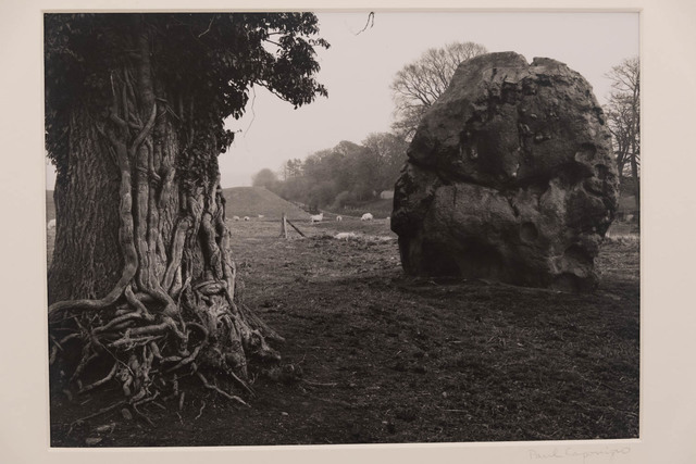 Paul Caponigro, 'Stone and Tree, Avebury, England', 1967, The Halsted Gallery