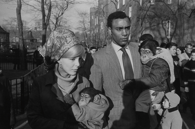 Garry Winogrand, 'Central Park Zoo, New York', 1967-printed later, Photography, Gelatin silver print, Phillips