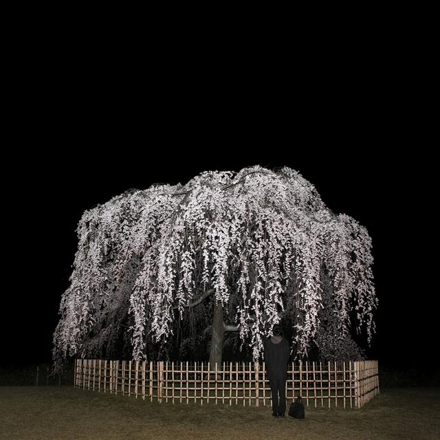 , 'Nightcall II,' 2013, Grundemark Nilsson Gallery