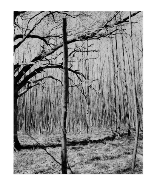 , 'Untitled (from Natur),' 1988-1989, Galerie Nordenhake