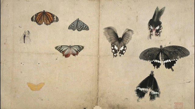 Mami Kosemura, '蝶  – Butterfly –', 2008, Video/Film/Animation, M4V, Micheko Galerie