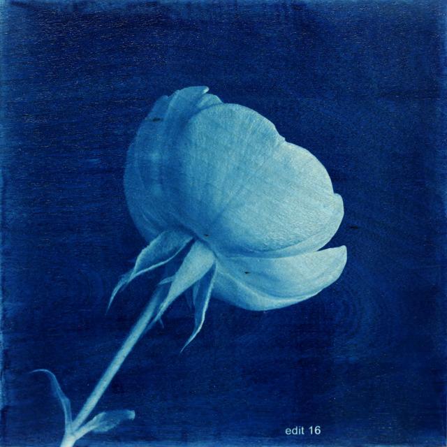 , 'Flower Proof 3,' 2013, Newzones