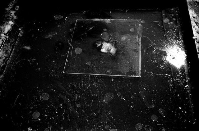 , 'Ice Forest,' 2013, ILEX Gallery