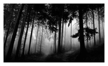 Robert Longo, 'Untitled (Fairmont Forest)', 2014, Print, Archival pigment print, Vogtle Contemporary