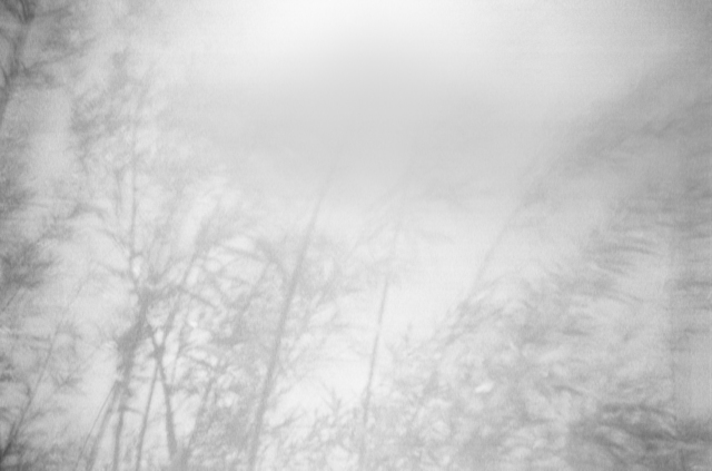 , 'Salix Alba V,' 2017, Galleri Duerr