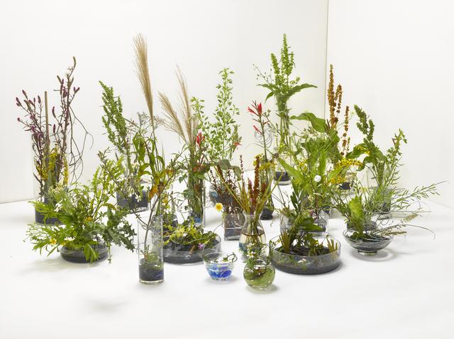 , 'A work for a building plot:  Make a flower arrangement for me,' 2011, TKG+