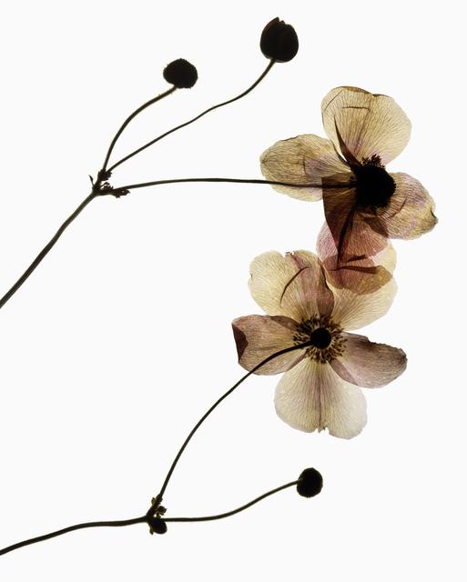 Edmund Clark, 'My Shadow's Reflection - Plant 23', 2017, Photography, Chromogenic print, Flowers