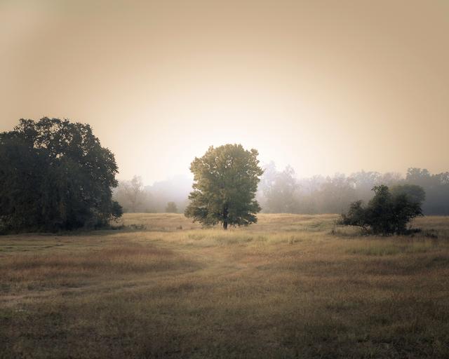 , 'Tree in the Mist, Plum Creek, Texas,' , Etherton Gallery