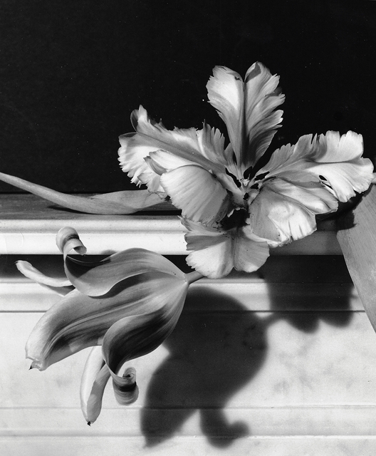 , 'Tulips, Oyster Bay, Long Island,' 1989, Staley-Wise Gallery