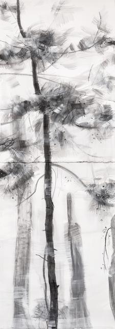Angus Nivison, 'Young Pine, Fresh Breeze - Zhangjiajie', 2018, Nockart Gallery