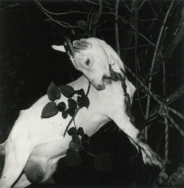 , 'Ginzan Onsen, Yamagata, 1976,' 1976-1979, PGI