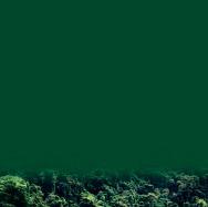 , 'Pantone: verde lluvioso - Pantone: rainy green,' 2017, Artflow Galeria