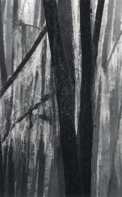 , 'Backlighted Moss, Mill Pond, Caddo Lake Texas,' , photo-eye Gallery
