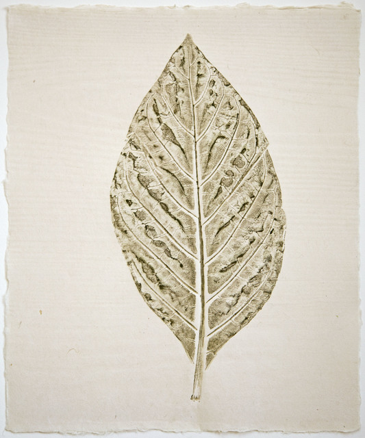 , 'Botanica Morinda citrifolia (Noni) ,' 2018, CMS Art Projects