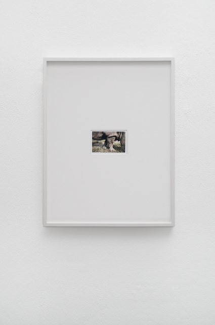, 'La Natura, una faccenda ottusa (Nature is a dull affair),' 2016, Galerie Mehdi Chouakri