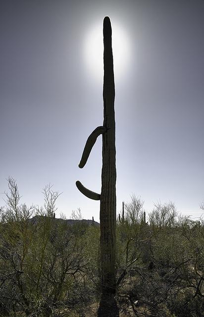 , 'Saguaro with Halo,' 2016, Lisa Sette Gallery