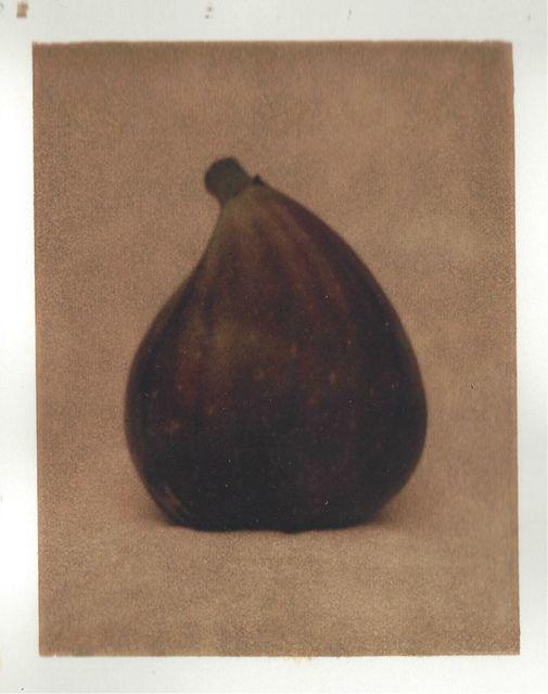 John Huggins, 'Fig', 2000, Sears-Peyton Gallery
