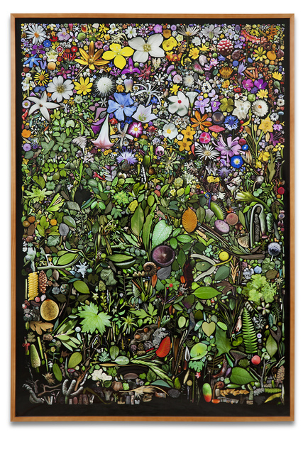 , 'Plant Collection Palette #1,' 2012, Kohn Gallery